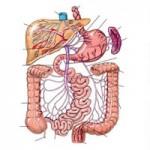 appartato-digestivo