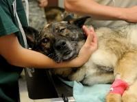 curare gli animali con l'osteopatia giorgio germano osteopata